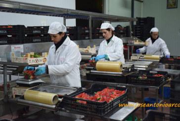 Huelva bate su récord exportador en la última campaña