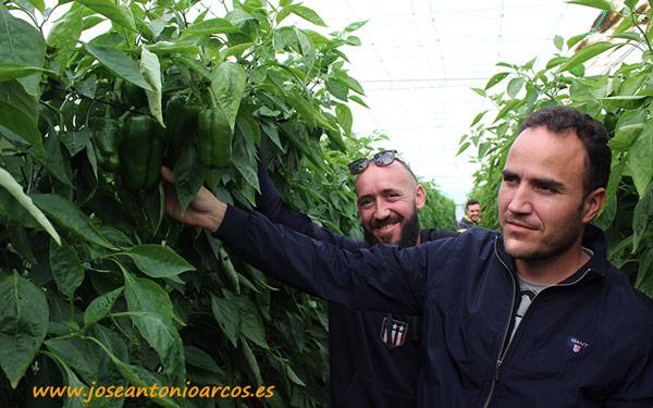 José y Javier Sánchez, agricultores de El Ejido, especialistas en cultivo de pimiento lamuyo.