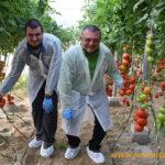 El jardín de tomates de Seminis