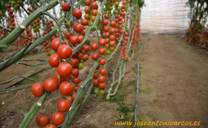 Cobre para agricultura ecológica