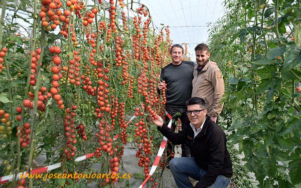 Zirconyta, tomate cherry de Seminis.