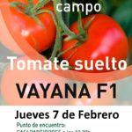 Día  7 de febrero. Jornada de campo de tomate de Takii Seed