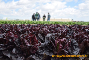 Syngenta inaugura su primer Salads Dynamics en Torre-Pacheco