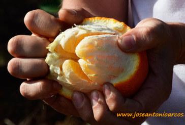 Las naranjas baratas se hacen caras a la mesa