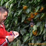 Syngenta enriquece catálogo de pimiento de siembras medias y tempranas