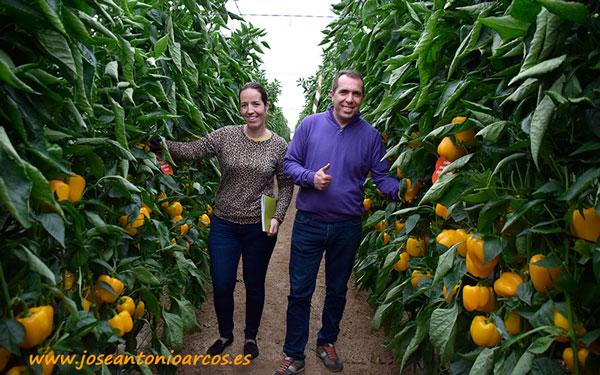Joven matrimonio de agricultores en un líneo de pimiento Nagai.