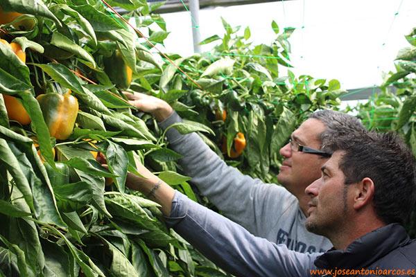 Agricultores almerienses de Eurosol.