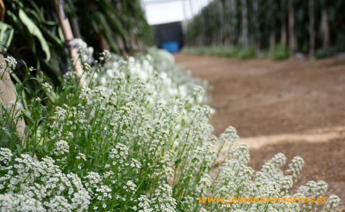 La Vía Eco distinguirá en Infoagro al segmento orgánico