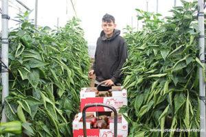 Luca, agricultor. Pimientos Naturinda.