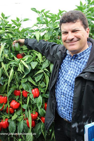 Jorge Viseras con pimiento Perseo de Sur Seeds.