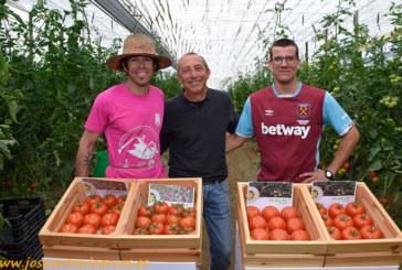 RZ lanza nuevas variedades de tomate suelto para subasta y confección