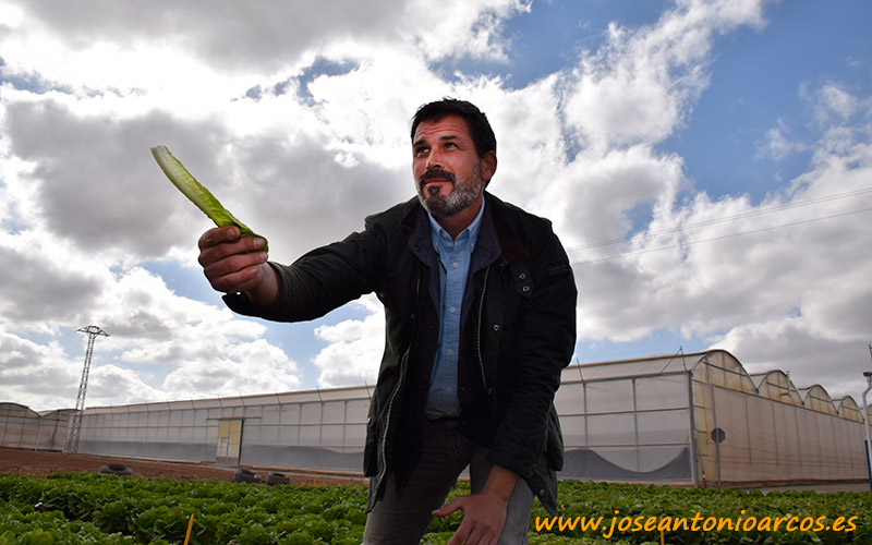 Alfonso Fernández, especialista de lechuga en BASF Vegetable Seeds.