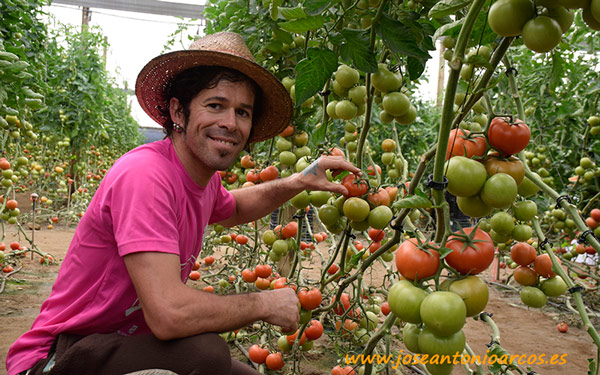 Javier Castillo con el tomate 74-340 RZ.