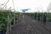 Projar lleva al  Global Berry Congress de Rotterdam sus soluciones para berries