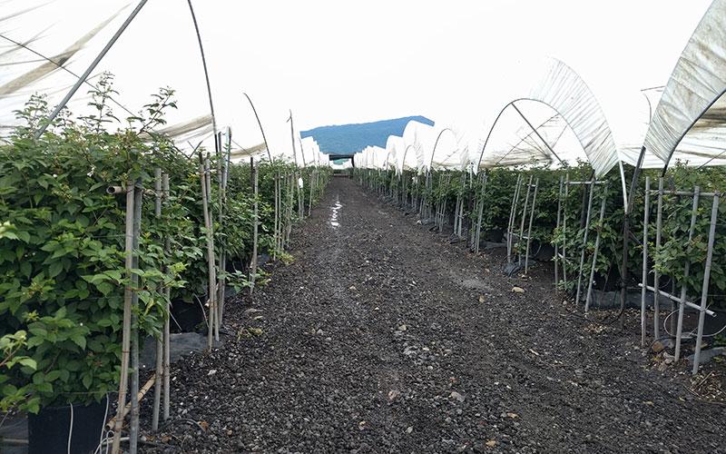 Projar muestra su capacidad internacional de suministro de tecnología y agroinsumos para el cultivo de frutos rojos - joseantonioarcos.es