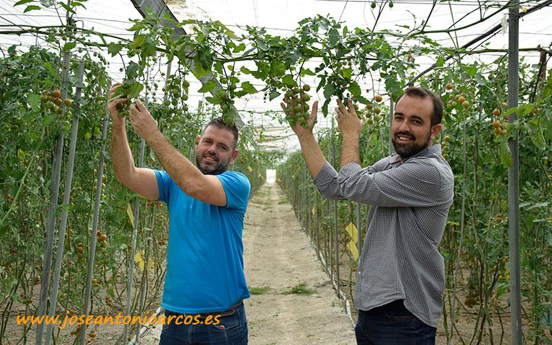 Antonio Arellano y Sergio Medina. Tomates de Zeraim en la costa de Granada. /joseantonioarcos.es