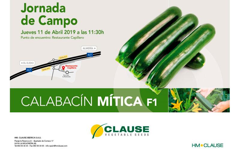 Calabacín Mítica de HM Clause - joseantonioarcos.es