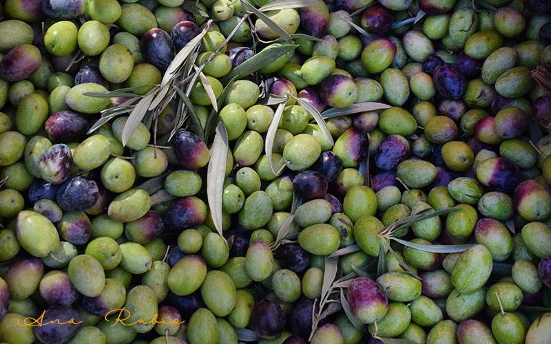 FMC despliega catálogo en soluciones eficaces para la sanidad en olivar
