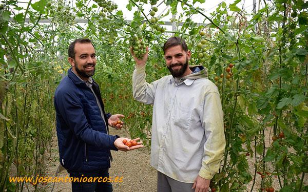Sergio Medina y Mario Ramírez con los tomates cherry Karelya. /joseantonioarcos.es