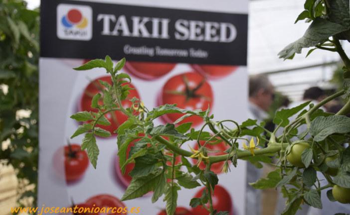 Vayana adelanta los trasplantes de tomate suelto en Almería