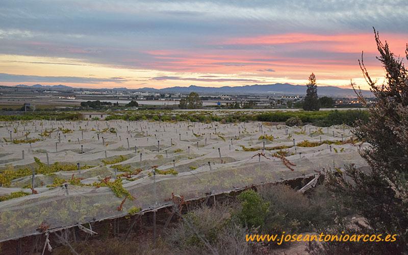 Murcia promociona su uva de mesa en China y Vietnam