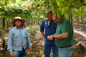 Ecoculture se abre paso en Brasil y Colombia
