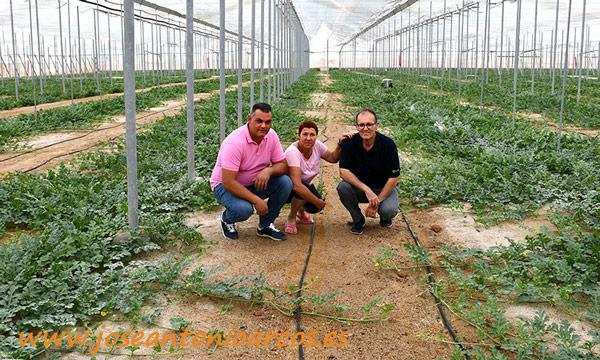 Ahorro de agua y abono en producciones ecológica - joseantonioarcos.es