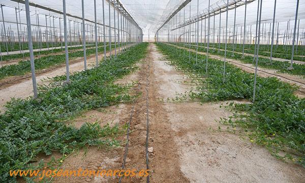 Ahorro de agua y abono en producciones ecológicas con Intagrate y Agroliner - joseantonioarcos.es