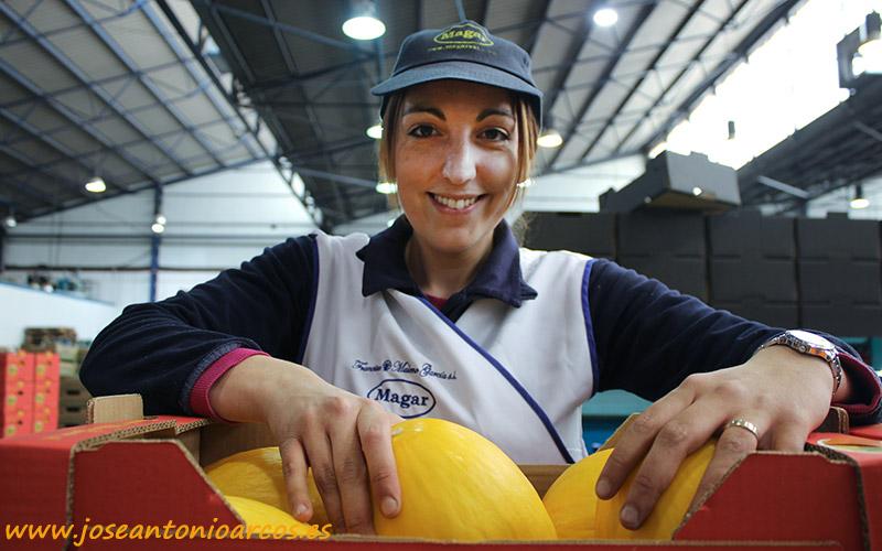 Este año el melón amarillo rueda antes por el campo