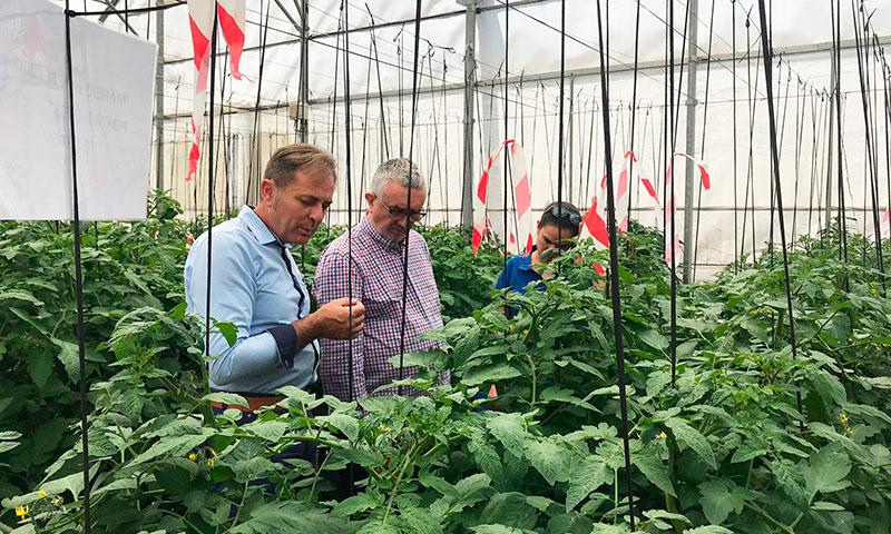 El objetivo de este proyecto es incrementar la tolerancia a estrés combinado hídrico y nutricional en el cultivo de tomate y maximizar la eficiencia de uso de agua y de nutrientes -joseantonioarcos.es