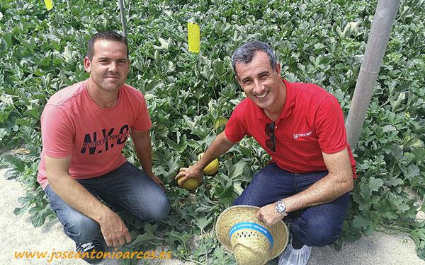 Melón galia Besodoble de Takii Seed - josenatonioarcos.es