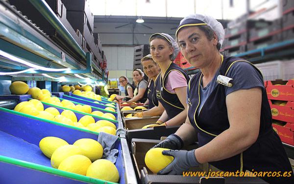 Confección de melón amarillo de MAGAR. /joseantonioarcos.es