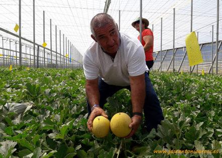 Melón galia recomendado para agricultura ecológica de Takii Seed - joseantonioarcos.es