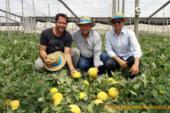 Galias de Takii para completar ciclo en Almería