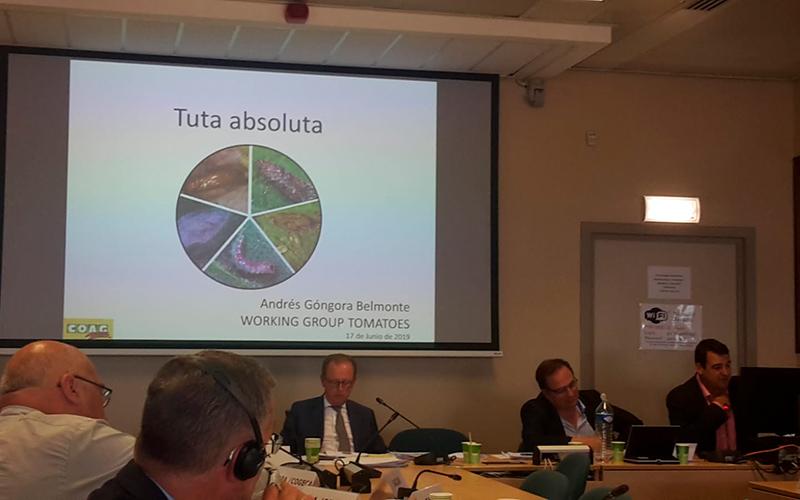 Andrés Góngora durante su intervención en el Grupo de Tomate de la UE. /joseantonioarcos.es
