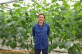 """""""El invernadero almeriense puede reutilizar 4 millones Tn. de CO2"""""""