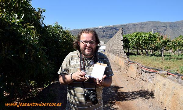 En la explotación conviven cultivos de aguacate (izquierda), con otros de mango (derecha) y piña (al fondo). /joseantonioarcos.es
