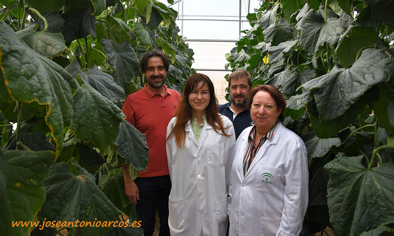 Los profesores de Campomar, Juan José y Javier, con Loli y Evangelina en uno de los invernaderos de ensayos del Ifapa. /joseantonioarcos.es