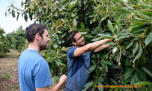 Carlos Álvarez, investigador ICIA, y Eduardo Torres, agricultor y técnico de Agro Rincón. /joseantonioarcos.es