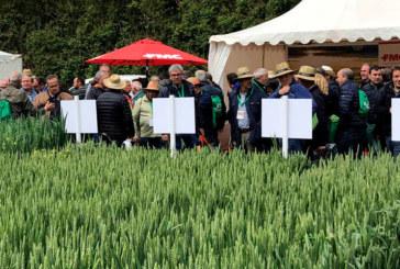 La sanidad en cultivos extensivos como el cereal