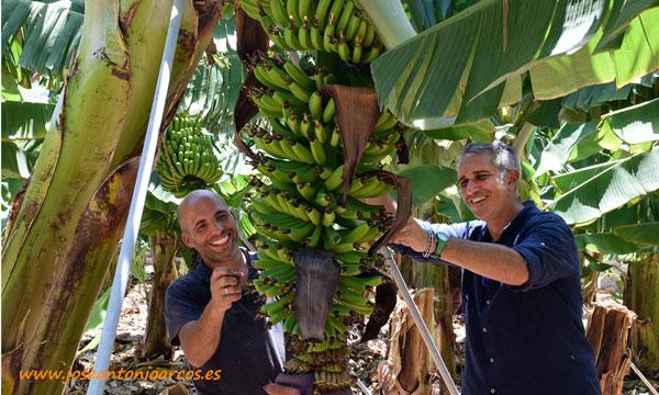 Bentacaice González y José Antonio Tavares rodean una piña. /joseantonioarcos.es