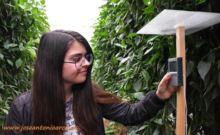 El plástico de solarización del verano como acolchado en invierno