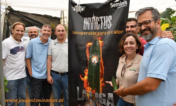 Pepino de Seminis Invictus-joseantonioarcos.es