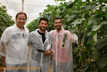 Pepinos de primavera entre productores de Vicasol
