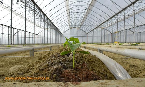 capacidad de convertir Co2 en productos naturales, saludables y rentables - joseantonioarcos.es