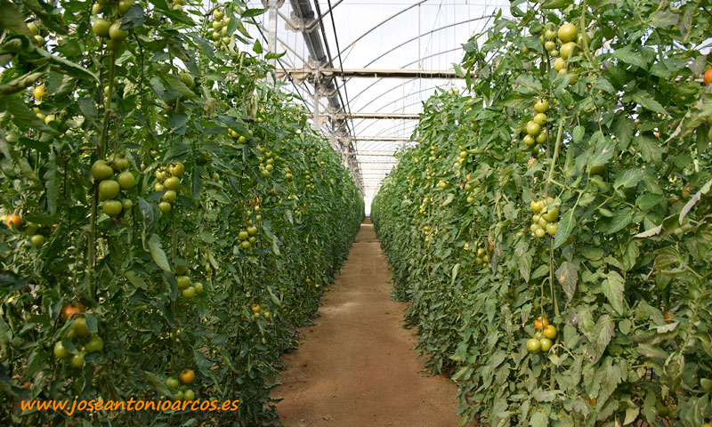 Invernaderos de tomate de Almería. /joseantonioarcos.es