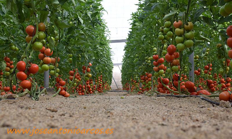 Invernaderos de tomate en Almería. /joseantonioarcos.es