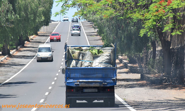 Un productor canario llevando sus piñas al empaquetado en Tenerife. /joseantonioarcos.es