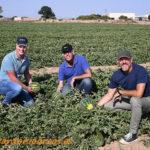 Hazera abre en Murcia la doble semana de las sandías