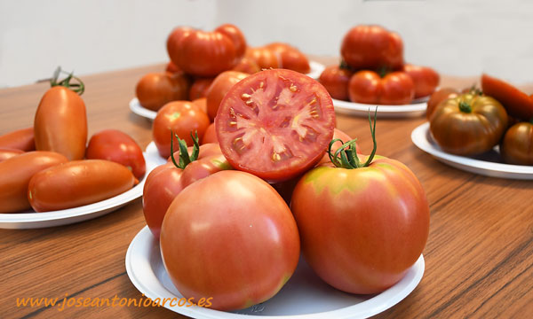 Un país de tomates llega a cada rincón de España con Syngenta -joseantonioarcos.es